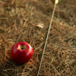 William tell metaphor with red apple and arrow — Stock Photo