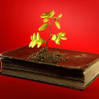 Plant growing from aged old book — Stock Photo