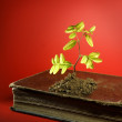 Plant growing from aged old book — Stock Photo #5503630