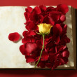 Stock Photo: Rose petals over old aged book