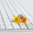 Concept of flowers growing from computer — Stock Photo