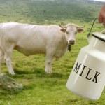 Milk pot farmer hand cow in meadow — Stock Photo #5504412