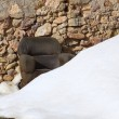 Stock Photo: Armchair on snowed stone masonry wall
