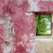 Aged weathered pink wall window beech forest — Stock Photo