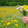 Children hand hold flowers in spring meadow — Foto Stock