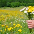 Children hand hold flowers in spring meadow — Stockfoto