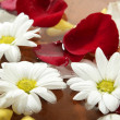 Rose petals and daisy flower on water spa — Stock Photo