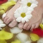 Aromatherapy, flowers feet bath, rose petal — Stock Photo #5504734
