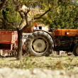 Stock Photo: Old rusted tractor orange color in Spain