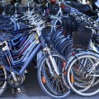 Bicycles in a row many in a cycle rent store — Stock Photo #5505364