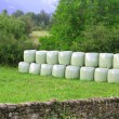 Cereal bales round green plastic wrap cover — ストック写真