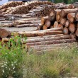 Logs timber industry trunks stacked outdoor - Foto de Stock