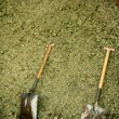 Stock Photo: Two shovel in dry alfalfa, horses food, granary, barn.
