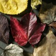 Stock Photo: Leaves still of autumn leaves, dark wood background, fall classic images