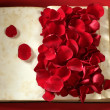 Rose petals over old aged book — Stock Photo #5505681