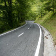 Asphalt winding curve road in a beech forest — Stock Photo #5505854