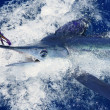 Beautiful white marlin real billfish sport fishing — Stock Photo #5505869