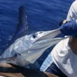 Billfish white Marlin catch and release on boat — Stock Photo #5505897