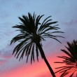 Blue and orange red sunset palm trees — Stock Photo