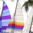 Hoby hobby cat colorful sails palm tree leaf — Foto de Stock