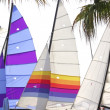 Hoby hobby cat colorful sails palm tree leaf — Стоковая фотография