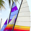 Hoby hobby cat colorful sails palm tree leaf — Photo