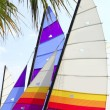 Stock Photo: Hoby hobby cat colorful sails palm tree leaf
