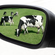 Stock Photo: Rearview car driving mirror view meadow cow