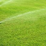 Grass garden spring water in a row — Stock Photo