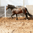 Dressage horse in round arenas with rope - Stock Photo