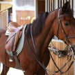Brown horse with saddle and reins — Stock Photo #5506478