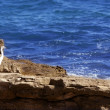 Sea white bird on a rocky mediterranean shore - Stock Photo
