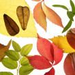 Autumn, fall leaves decorative still at studio white background — Stock Photo