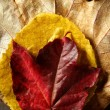 Still of autumn leaves, dark wood background, fall image — Stockfoto