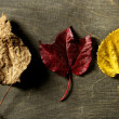 Stock Photo: Still of autumn leaves, dark wood background, fall image