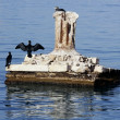 Black cormorant opening wings to get dry - 