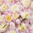 Colorful pink and yellow flowers background — Stock Photo #5507114