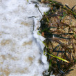 Stock Photo: Algae from Mediterranean, green seaweed