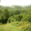 Stock Photo: Cloudy day in the forest meadow green
