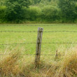 Green meadow with wired rural fence — Stock Photo