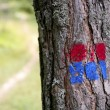 Forest tree signal in red and blue rural track - Stock Photo