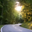 Asphalt winding curve road in a beech forest — Stock Photo