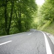 Asphalt winding curve road in a beech forest - Stock Photo