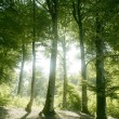 Beech green magic forest woods — Stock Photo #5507196