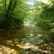 Stock Photo: Beech forest trees with river flow under