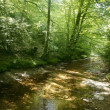 Beech forest trees with river flow under — Stock Photo