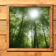 Wooden window jungle green forest view — Stock Photo