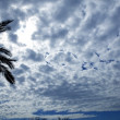 Cloudy sky backlight with palm tree - Stock Photo