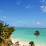 Tulum mayan riviera tropical beach palm trees — Stock Photo