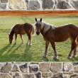 Stone masonry wall window horses meadow view — Stock Photo